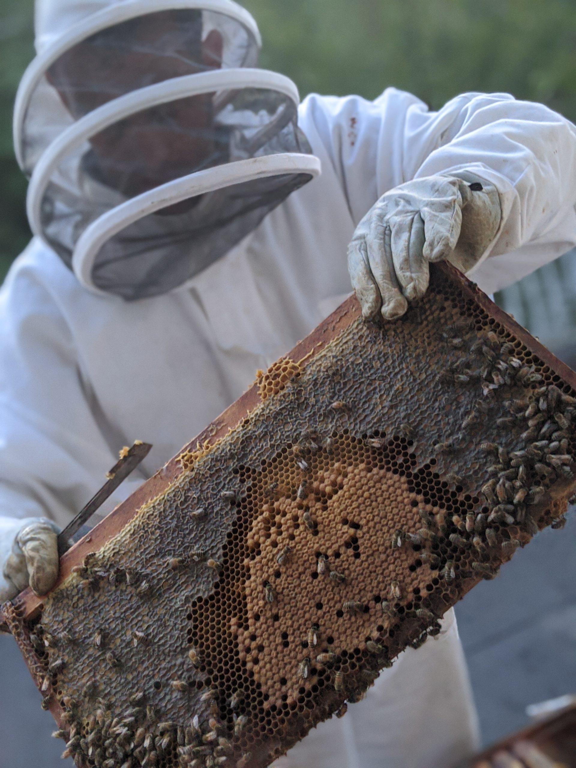 ben aston beekeeper